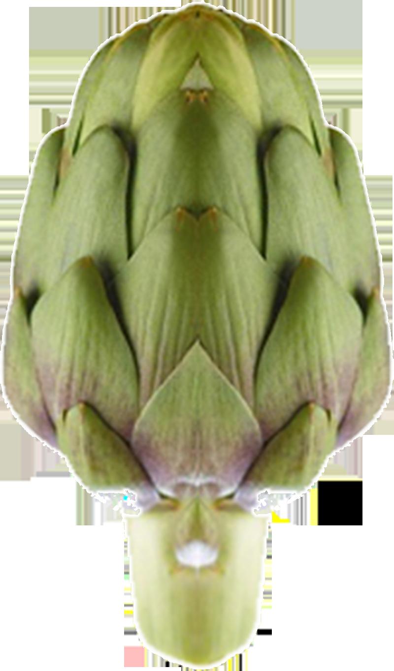 carciofo 2